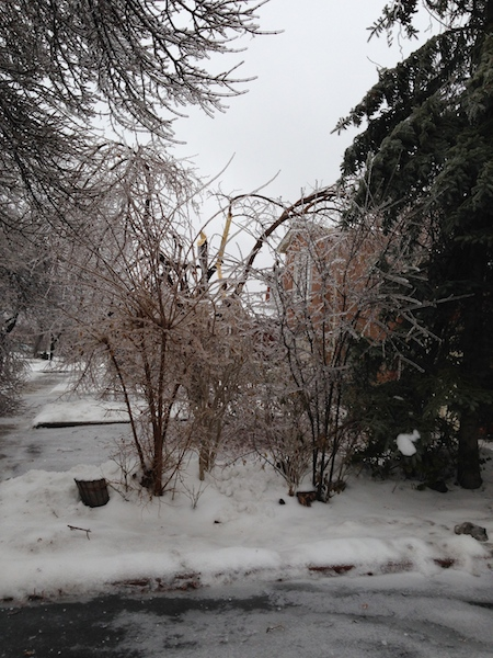 Ice Storm Downed Trees, Vaughan-44