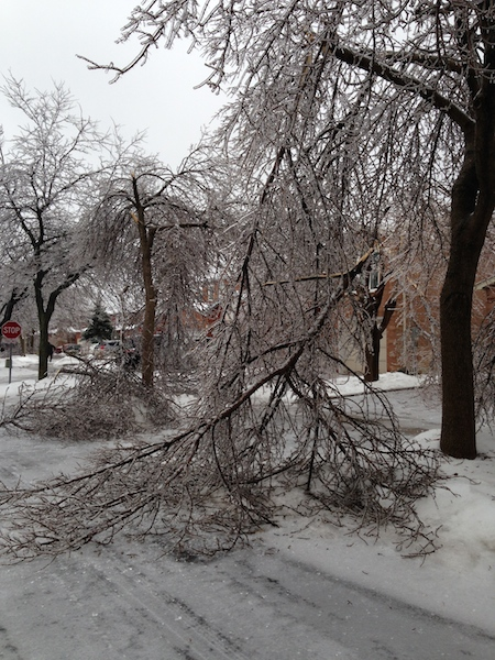 Ice Storm Downed Trees, Vaughan-47