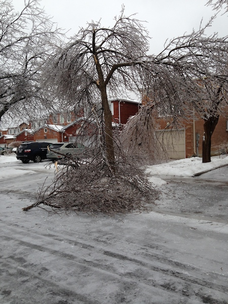 Ice Storm Downed Trees, Vaughan-48