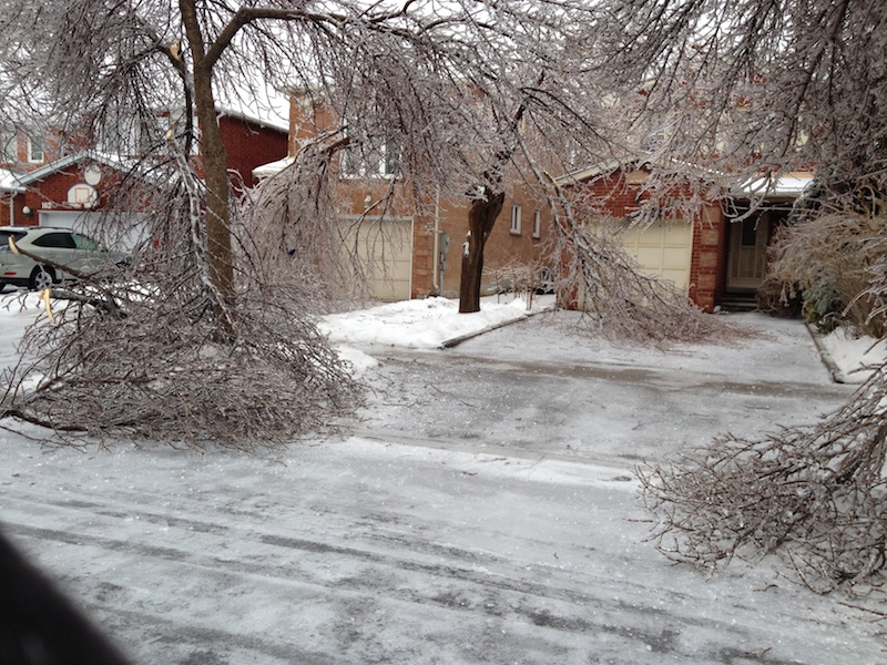 Ice Storm Downed Trees, Vaughan-49