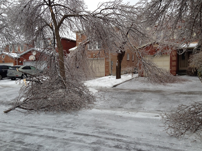 Ice Storm Downed Trees, Vaughan-51