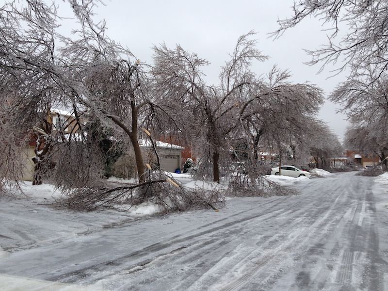 Ice Storm Downed Trees, Vaughan-55