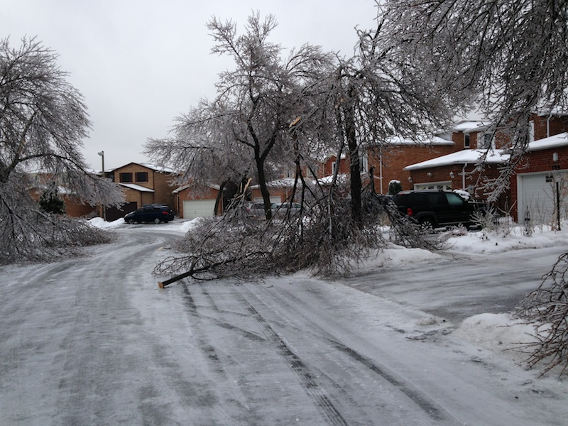 Ice Storm Downed Trees, Vaughan-59