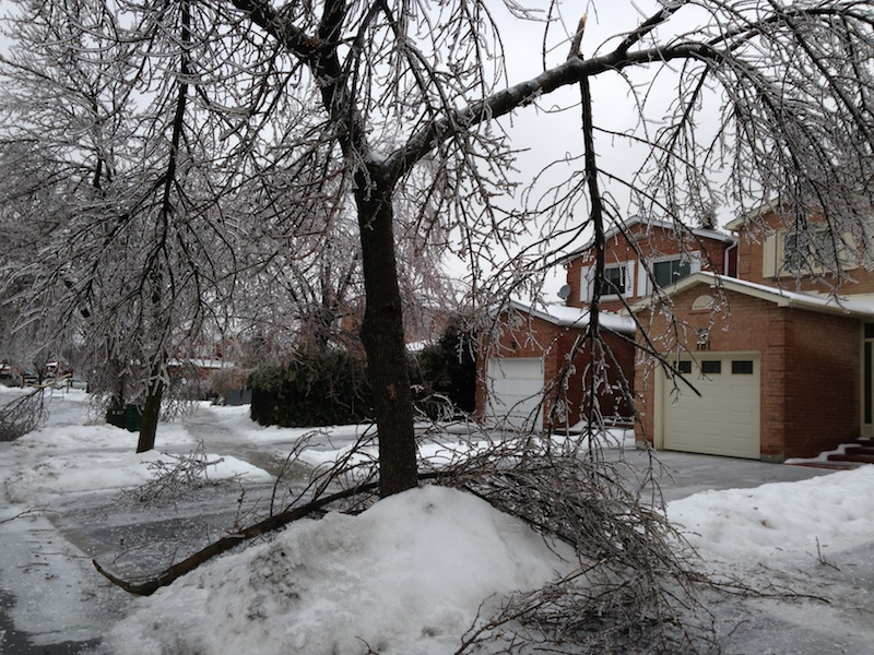 Ice Storm Downed Trees, Vaughan-60