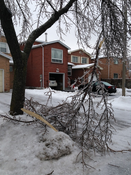 Ice Storm Downed Trees, Vaughan-62