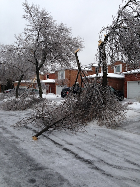 Ice Storm Downed Trees, Vaughan-66