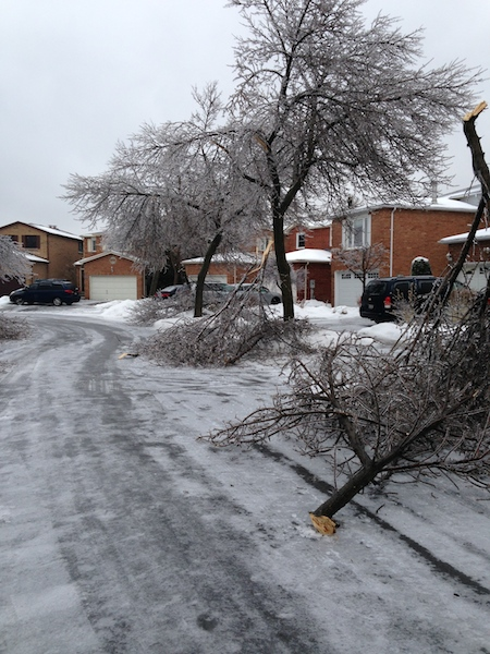 Ice Storm Downed Trees, Vaughan-67