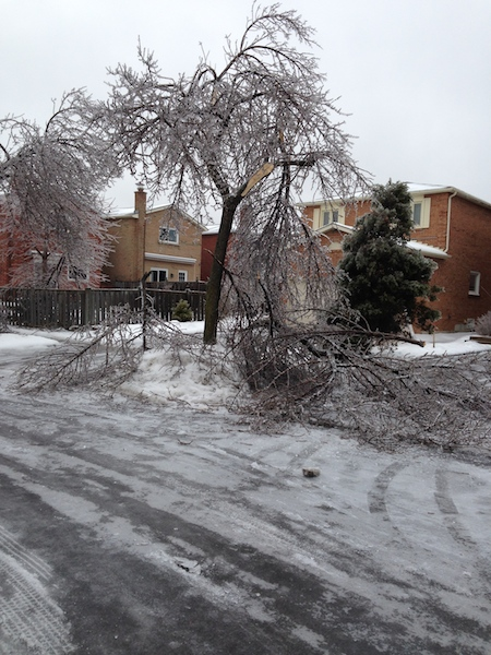 Ice Storm Downed Trees, Vaughan-73