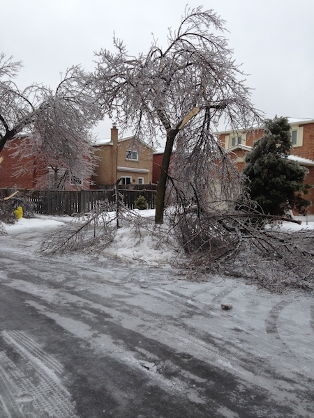 Ice Storm Downed Trees, Vaughan-74