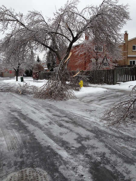 Ice Storm Downed Trees, Vaughan-75