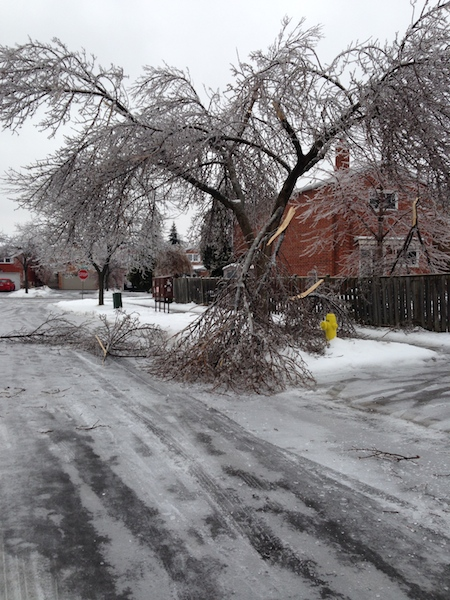 Ice Storm Downed Trees, Vaughan-76