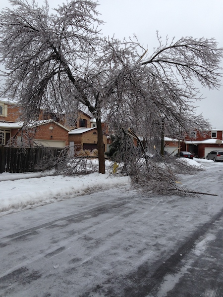 Ice Storm Downed Trees, Vaughan-78