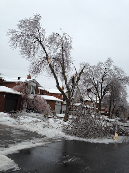 Ice Storm Downed Trees, Vaughan-80