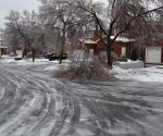Ice Storm Downed Trees, Vaughan-2