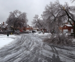 Ice Storm Downed Trees, Vaughan-3