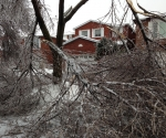 Ice Storm Downed Trees, Vaughan-14