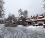 Ice Storm Downed Trees, Vaughan-18