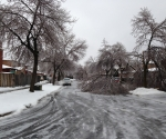 Ice Storm Downed Trees, Vaughan-19