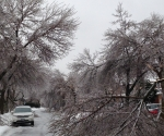 Ice Storm Downed Trees, Vaughan-21