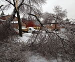Ice Storm Downed Trees, Vaughan-29