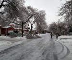 Ice Storm Downed Trees, Vaughan-32